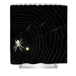 Spider Moon Shower Curtain