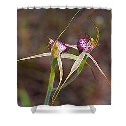 Spider Orchid Australia Shower Curtain