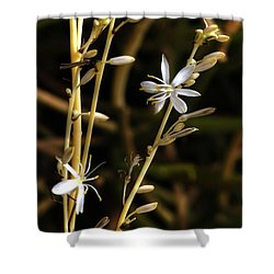 Spider Plant Blossoms Shower Curtain