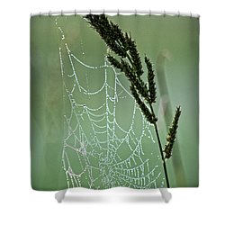 Spider Web Art By Nature Shower Curtain by Ella Kaye Dickey