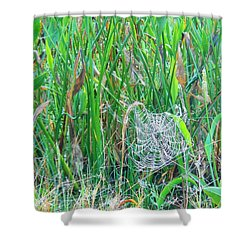 Shower Curtain featuring the photograph Spider Web by Kay Gilley
