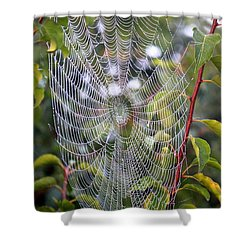 Spider Web Shower Curtain