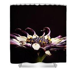 Spider White Shower Curtain