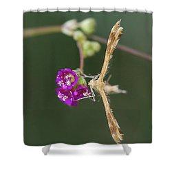 Spiderling Plume Moth On Wineflower Shower Curtain