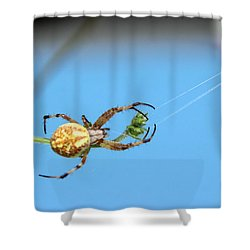 Spinning The Web Shower Curtain by Charles Ables