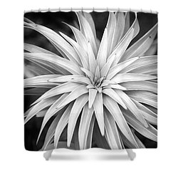 Shower Curtain featuring the photograph Spiral Black And White by Christina Rollo