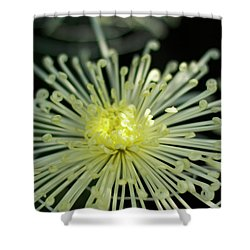 Spiral Chryanth Shower Curtain