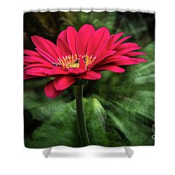 Spiral Pink Flower Focus Shower Curtain