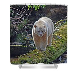 Shower Curtain featuring the photograph Spirit Bear by Myrna Bradshaw