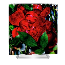 Spirit Of The Rose Shower Curtain by Gina O'Brien
