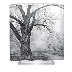 Shower Curtain featuring the photograph Spirit Of The Tree by Kadek Susanto