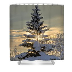Spirit Tree Shower Curtain by Brad Allen Fine Art