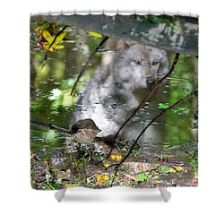 Spirits Of Wolves Shower Curtain by Scott Mahon