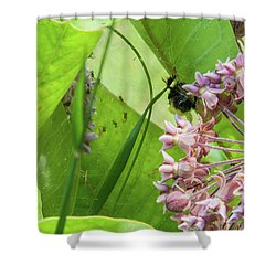 Spl-1 Shower Curtain