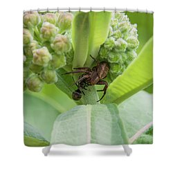 Spl-2 Shower Curtain