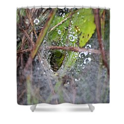 Spl-3 Shower Curtain