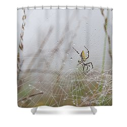 Spl-4 Shower Curtain