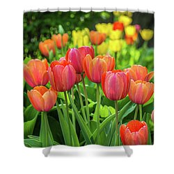 Shower Curtain featuring the photograph Splash Of April Color by Bill Pevlor