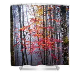 Shower Curtain featuring the photograph Splash Of Colour by Elena Elisseeva