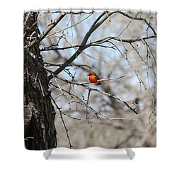 Shower Curtain featuring the photograph Splash Of Orange - 3 by Christy Pooschke