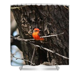 Shower Curtain featuring the photograph Splash Of Orange by Christy Pooschke