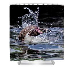 Splashing Humboldt Penguin Shower Curtain by Scott Lyons