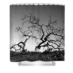 Split Single Tree On Hillside - Black And White Shower Curtain