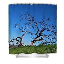 Split Single Tree On Hillside Shower Curtain