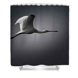 Spoonbill In Flight Shower Curtain by Ramabhadran Thirupattur