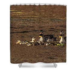 Spot Billed Duck Family  Shower Curtain