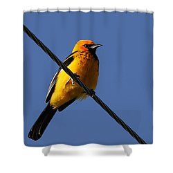 Spot Breasted Oriole Shower Curtain