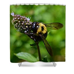 Shower Curtain featuring the photograph Spot, My Bumblebee by Lew Davis