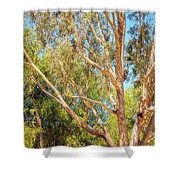 Spot The Koala, Yanchep National Park Shower Curtain by Dave Catley
