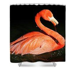 Spotlight On A Bathing Flamingo Shower Curtain