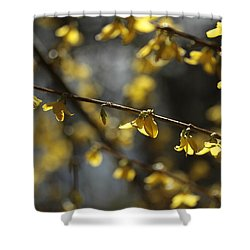 Shower Curtain featuring the photograph Spotlights  by Connie Handscomb