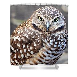Spots - Burrowing Owl Shower Curtain