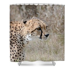 Shower Curtain featuring the photograph Spotted Beauty 2 by Fraida Gutovich