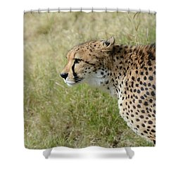 Shower Curtain featuring the photograph Spotted Beauty 3 by Fraida Gutovich