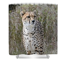 Shower Curtain featuring the photograph Spotted Beauty by Fraida Gutovich