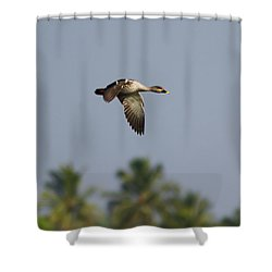 Spot-billed Duck - In Flight Shower Curtain