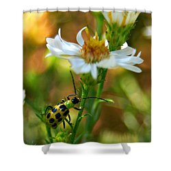 Spotted Cucumber Beetle On Aster Shower Curtain