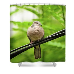 Spotted Dove   Shower Curtain by Venura Herath