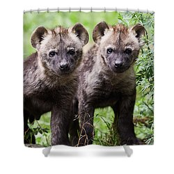 Shower Curtain featuring the photograph Spotted Hyena Cubs I by Nick Biemans