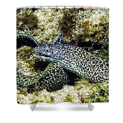 Spotted Moray Eel Shower Curtain