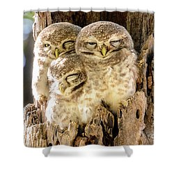 Spotted Owlets Shower Curtain