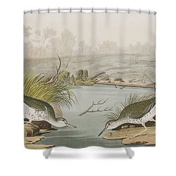 Spotted Sandpiper Shower Curtain