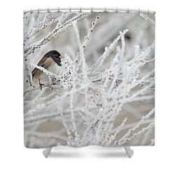 Spotted Towhee In Winter Shower Curtain
