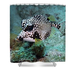 Spotted Trunkfsh Shower Curtain by Jean Noren