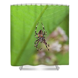 Spp-1 Shower Curtain