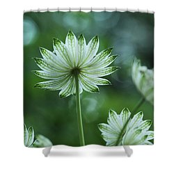 Botanica .. Spray Of Light Shower Curtain